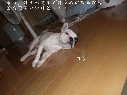 20060613094718.jpg