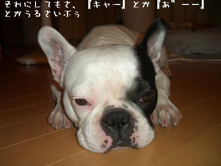20060613094732.jpg