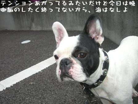 20060713105032.jpg