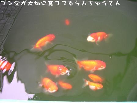 20060714130632.jpg