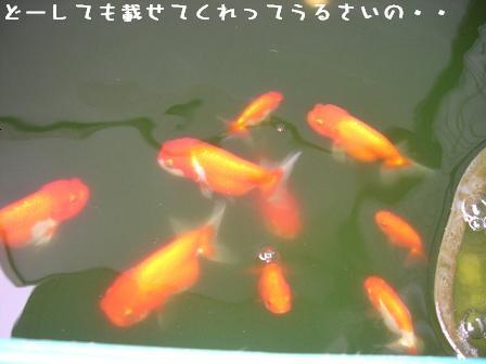 20060714130640.jpg
