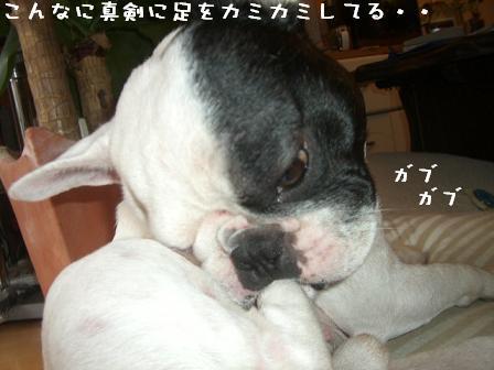 20060720123149.jpg