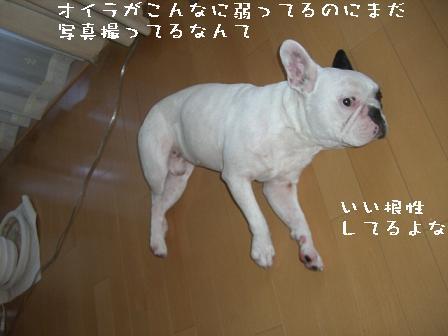 20060908113441.jpg