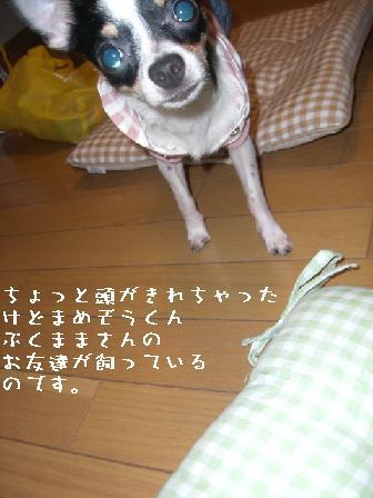 20060911111553.jpg