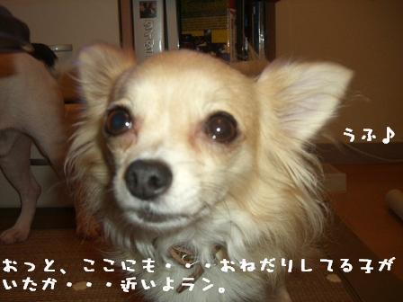 20060919125507.jpg