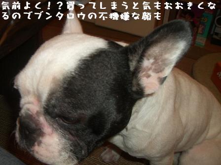 20061101114331.jpg
