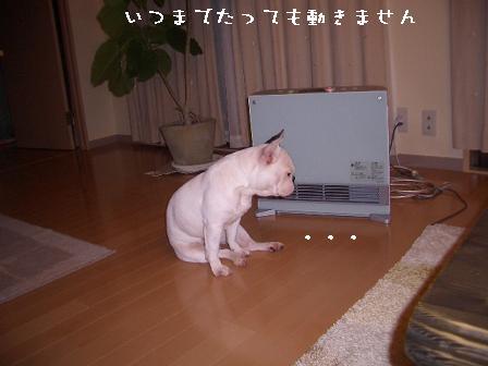 20061102110433.jpg