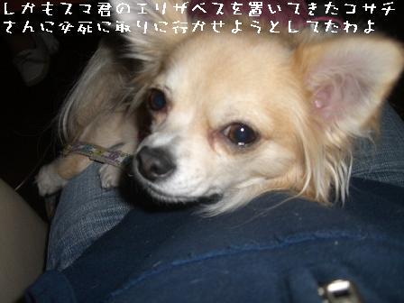 20061104080952.jpg