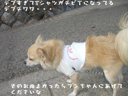 20061109162737.jpg