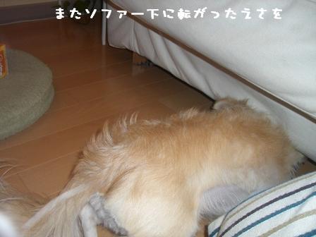 20061116112607.jpg
