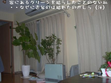 20070308084840.jpg