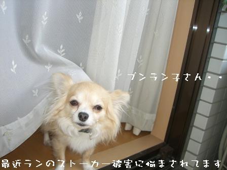 20070506162737.jpg