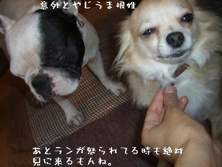 20070611214106.jpg