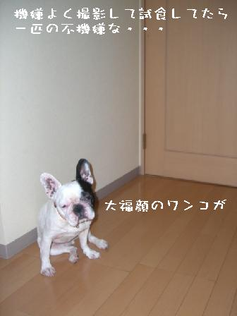 20070619104944.jpg