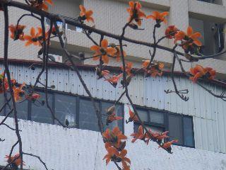 0903mianshu1.jpg