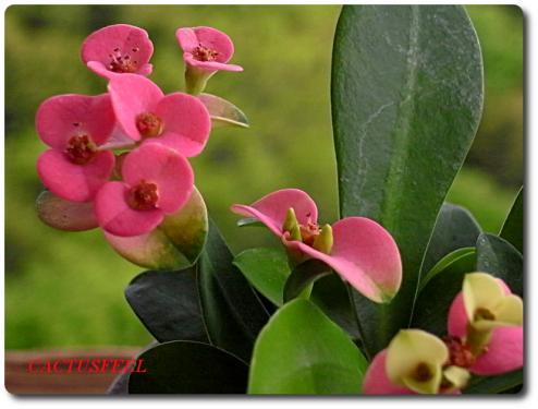 花キリン0428-4