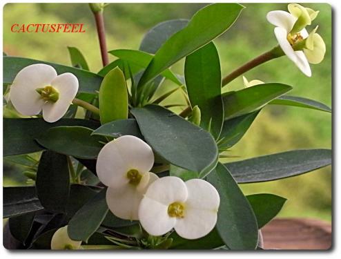 花キリン0428-2