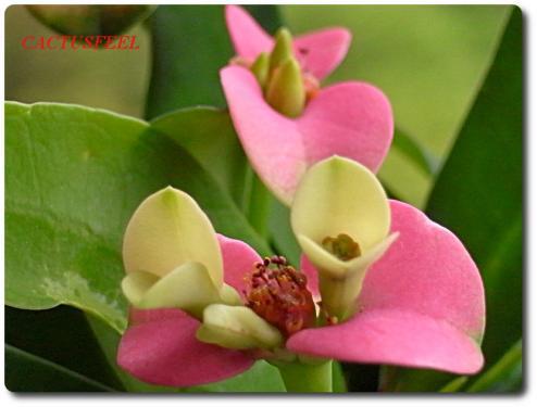 花キリン0428-5