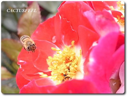 京都植物園0524-4