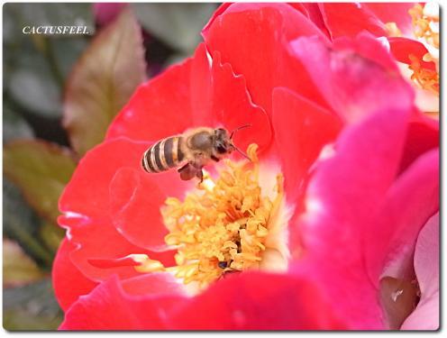 京都植物園0524-5