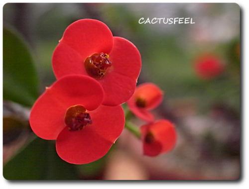 花キリン0721-1