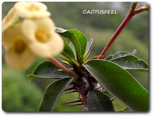花キリン0721-4
