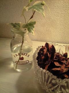 観葉植物と松かさ