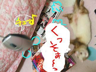 DSCF0576.jpg