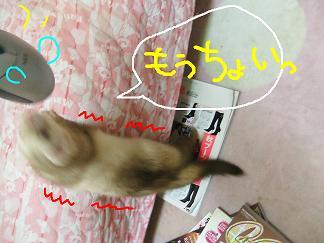 DSCF0578.jpg