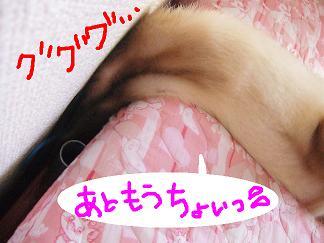 DSCF0907.jpg