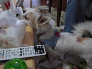 dog 031-1
