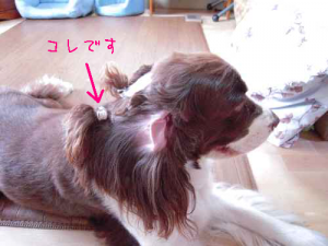 dog 059-1