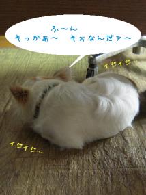 dog 003