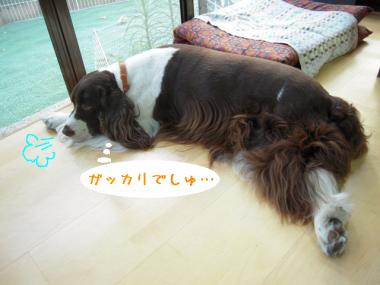 dog 004