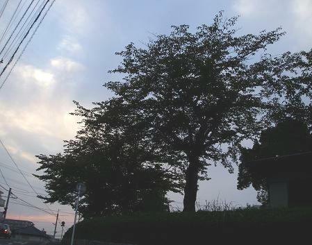 meruと見た風景 ( 2008.10 夕暮れ )