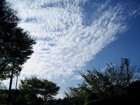 風景 ( 2008 october )