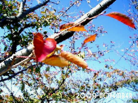 風景 ( 2008 november )
