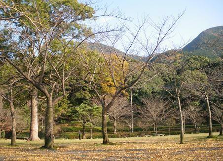 風景 ( 2008 december )