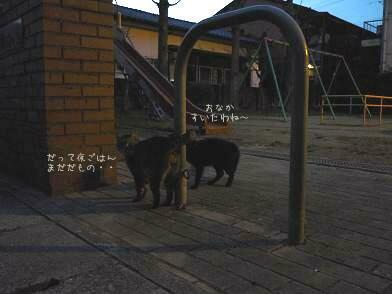 ニャンコさんたち ( 2008 december )