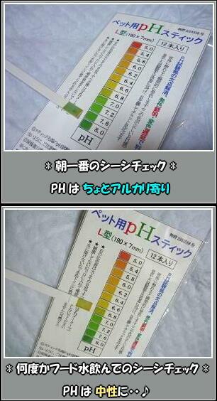 check!! ( ´Д`d) check!!
