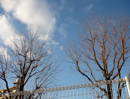空 ( 2009 january )