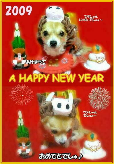 ★:゜*☆※>o◎('(x)'*)◎:::☆A Happy New Year 2009☆:::◎(*'(x)')◎o<※☆:゜*★