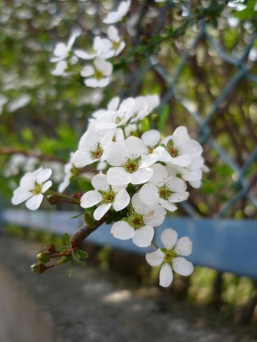 花 ( 2009 march )