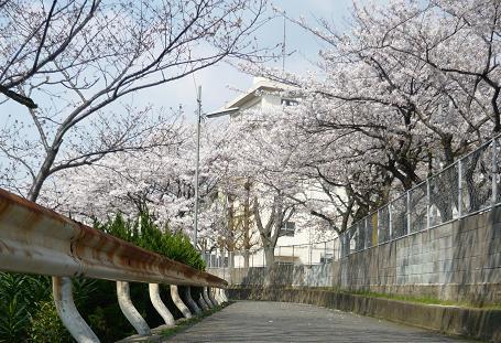 風景 ( 2009 april )