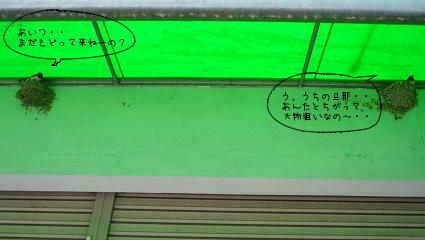 ツバメーず ( 2009 may )