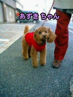 ぉ散歩中に、こんにちヮン♪ ( photo by mobile phone )