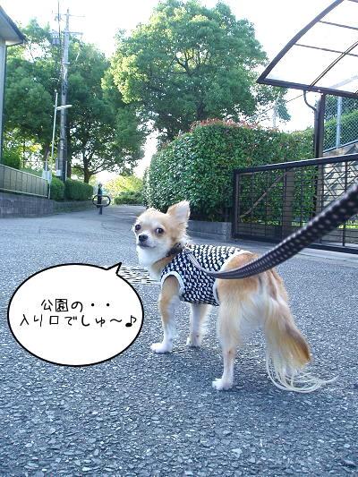 ぁ、ぁれは公園の入り口・・ヤタ━━━━U(*゚ω゚*)U━━━━ッ !!