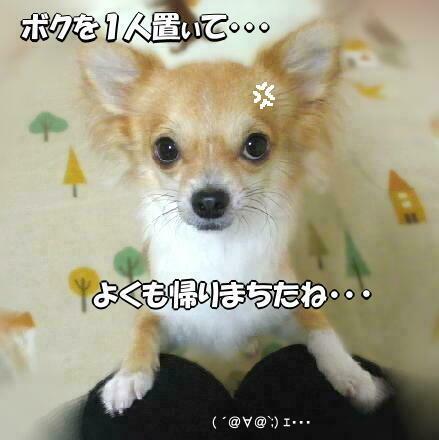 シャンプーDay ( 2008.12 )