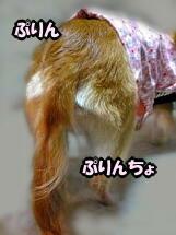 ぉちり(・ω・ *U))((U* ・ω・)プリプリ~♪