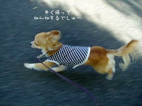 シュタタタタ...(((((((U* o・`ω・)o